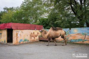 Владикавказский зоопарк заиграл новыми красками