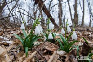 Первый день весны в горах Осетии