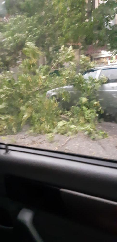 С. ОСЕТИЯ. Во Владикавказе ветер повалил деревья