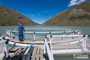 Ловись, рыбка: в акватории Зарамагского водохранилища активно развивается форелевое хозяйство