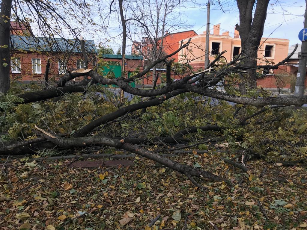 Жителей Владикавказа призывают воздержаться от прогулок в лесопарковых зонах города