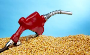 Кукуруза вместо нефти или зеленый свет биоэтанолу