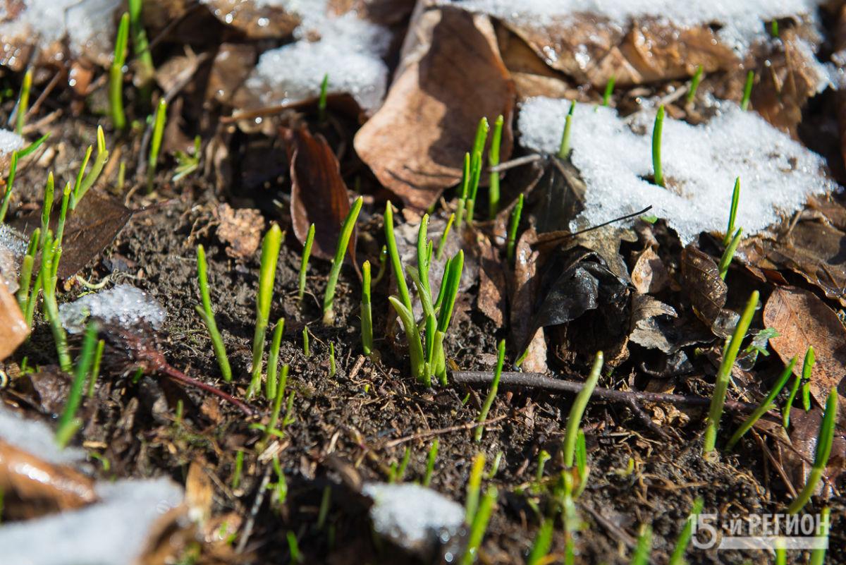 Деликатес из-под снега