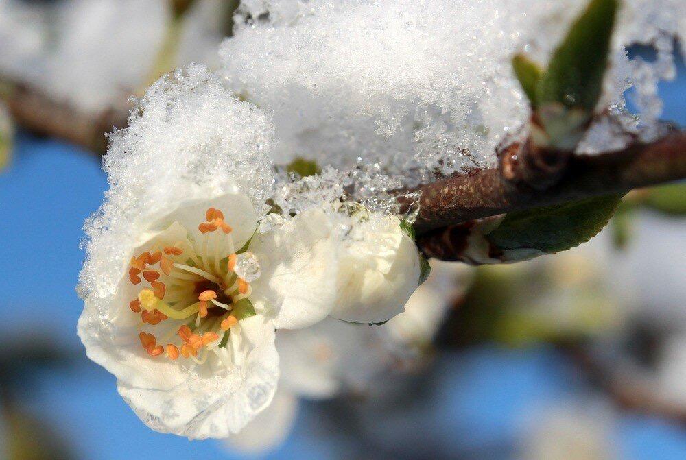 В Северной Осетии ожидаются заморозки