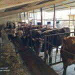 Молодой фермер из селения Кирово получит землю для разведения скота