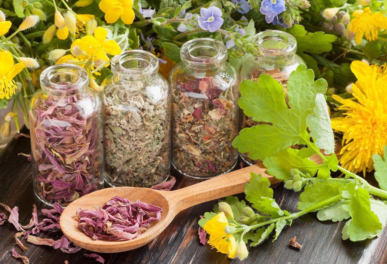 Весенняя аллергия – лечение травами
