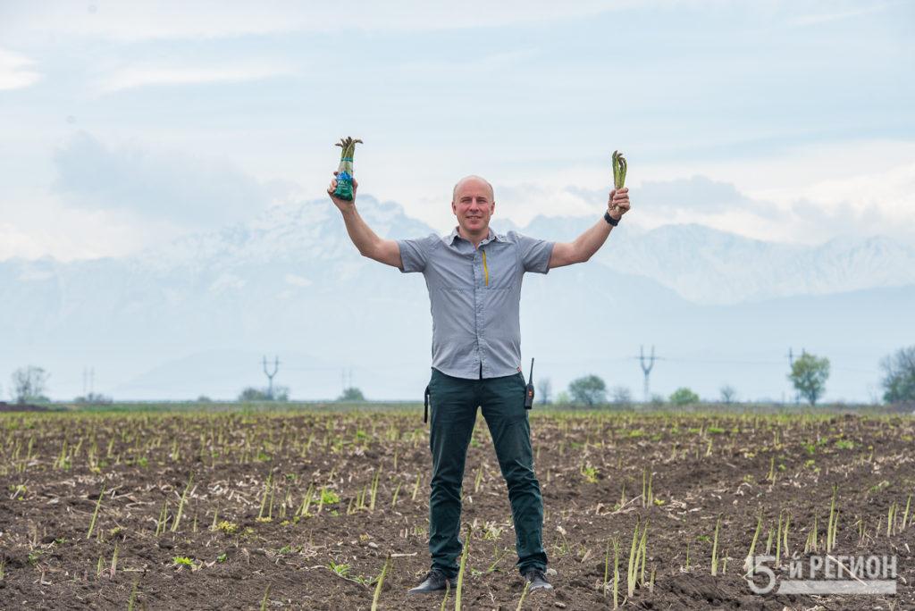 В Северной Осетии начался сбор первого урожая спаржи