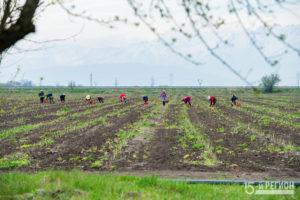 Сельское хозяйство: реалии и перспективы