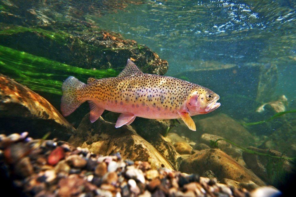 В Северной Осетии планируют производить 30 тысяч тонн товарной рыбы в год