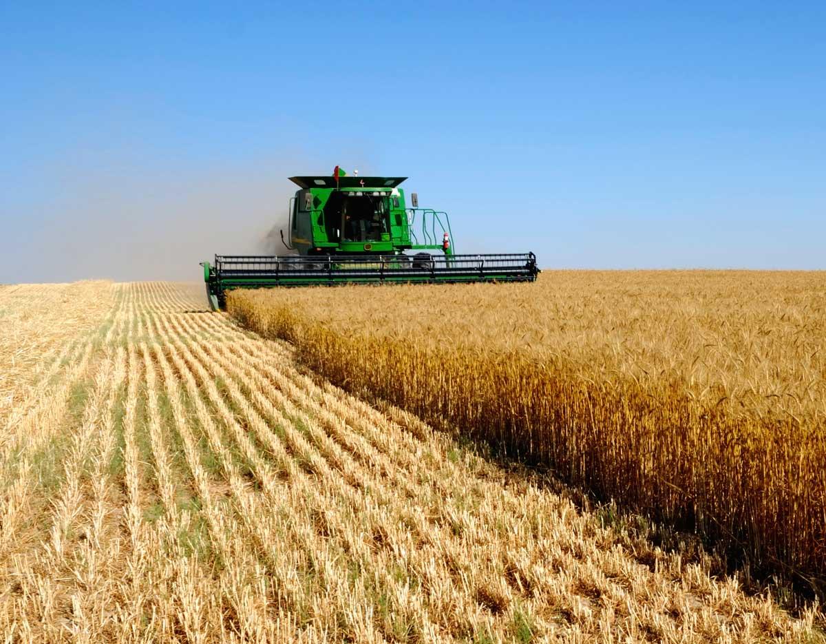 Северная Осетия заняла 7 место в России по темпам развития сельского хозяйства