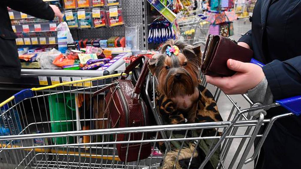 В России могут ввести правила посещения кафе и магазинов с домашними животными