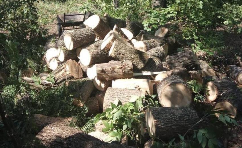 Житель Беслана подозревается в незаконной вырубке ценных пород дерева